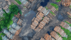 B_Deforestation - climate risk